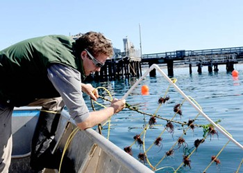 Building a Better Abalone