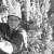 Save a Tree, Climb a Redwood
