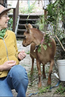 Tour an Urban Farm (or Two or Six)