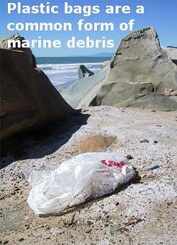 plastic_bags.jpg