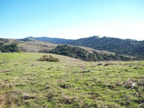 The latest plan for the parcel included 300 homes on 224 acres. - PHOTO BY JANIS HASHE