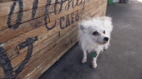 Drake's Dealership is well-known for welcoming pups onto its spacious patio. - PHOTO BY LANCE YAMAMOTO