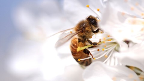 Research published earlier this year found that chronic exposure to high doses of neonicotinoids causes significant decline in honey production.
