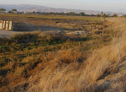 The Newark wetlands that Lucero was using to dump are home to endangered salt marsh harvest mice and burrowing owls. - PHOTO BY COMMITTEE TO COMPLETE THE REFUGE - VIA COURT FILINGS