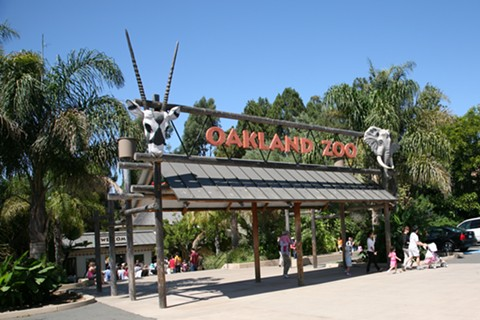 Oakland Zoo officials contend the facility should be viewed as an outdoor museum, a type of business already allowed to reopen. - FILE PHOTO