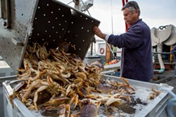 Dungeness crab. - BERT JOHNSON/FILE PHOTO