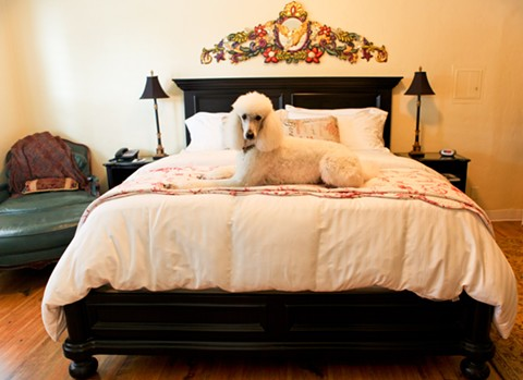 At the Half Moon Bay Inn, all fifteen rooms are dog-friendly. - HALF MOON BAY INN