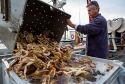 Dungeness crab. - BERT JOHNSON/FILE PHOTO