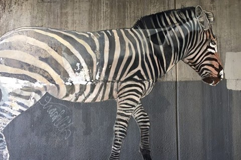 A partially restored zebra. - COURTESY DAN FONTES