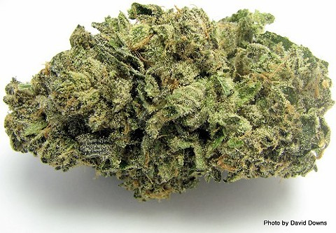 Medical marijuana: that'll be 7.5 percent sales tax, please. - DAVID DOWNS