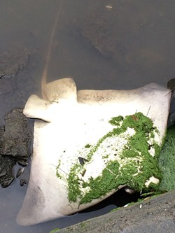 A dead bat ray found in Lake Merritt on February 21. - PHOTO BY JAMES ROBINSON