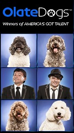 Olate Dogs - Winner of America's Got Talent - at Bal Theatre!