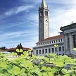 Berkeley's Irish Summers