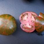 Tomatotopia