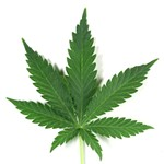 Will Revenue From Legalizing Marijuana and Passing Proposition 64 Mostly Go To Police?