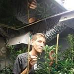 Growing Clean Cannabis to Pass California's New Rules