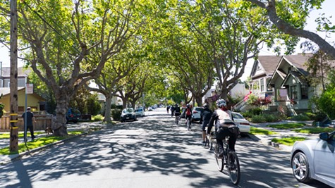 Riding underneath the massive trees of quiet Alameda.