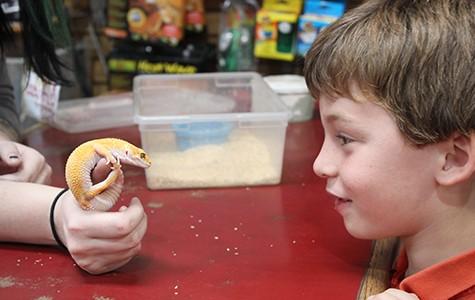 Dominic Faso, six, meets a leopard gecko at Vivarium in Berkeley.