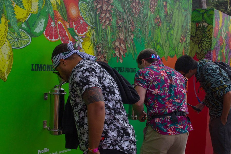 The Smell Wall lets you compare the aromas of different cannabis strains. - PHOTO BY ADRIENNE LEE