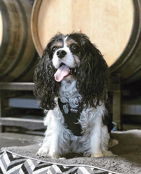 Bring your pup to Cleophus Quealy Beer Company for Yappy Hour.