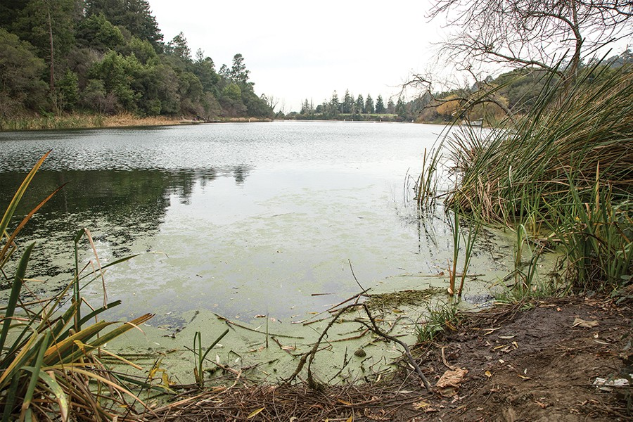 There is evidence that the repeated closures of Lake Temescal in recent years were caused, at least in part, by nearby spills from city of Oakland sewer pipes. - PHOTO BY GABRIELLE CANON