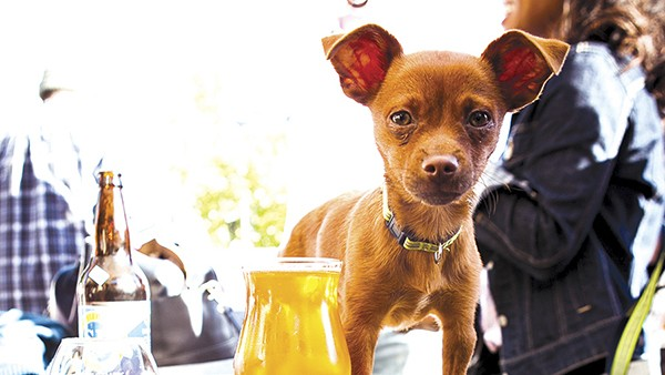 You can bring your pooch to events at Beer Revolution. - FILE PHOTO BY STEPHEN LOEWINSOHN
