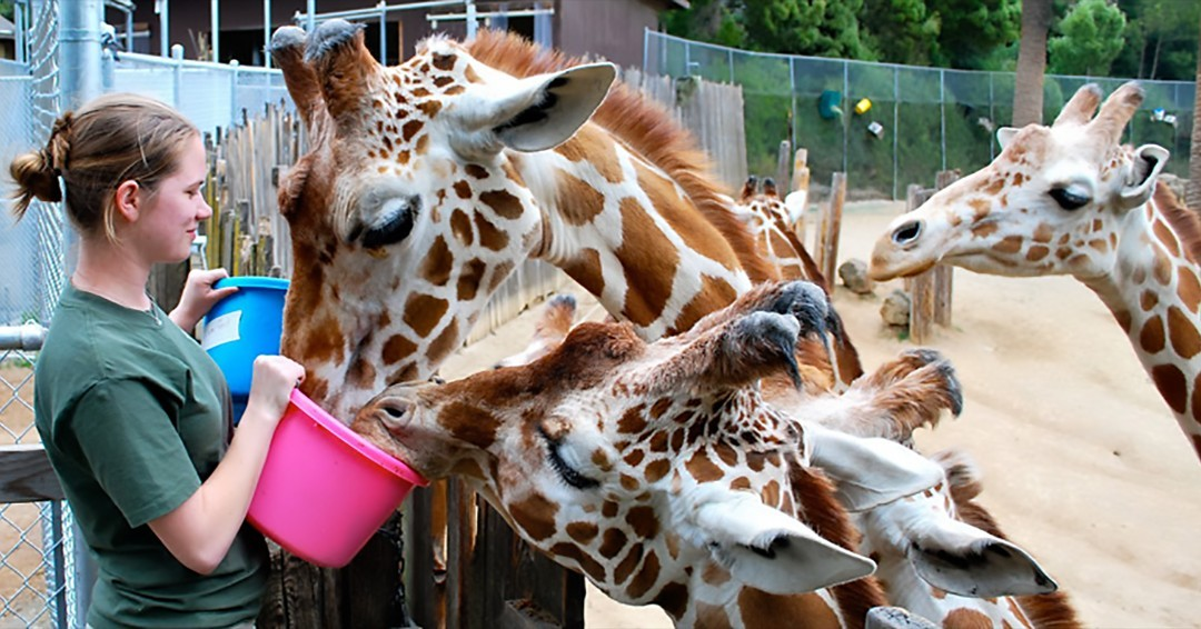 State variance, if granted, will allow the Oakland Zoo to reopen for outdoor-only uses. - OAKLAND ZOO
