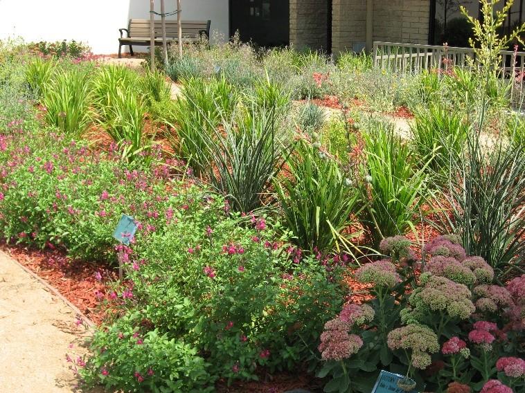 A drought tolerant garden.
