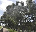 Cemetery and Enviros Reach Deal on Oaks