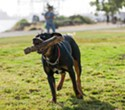 A Rundown of East Bay Dog Parks