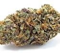 Garden of Eden in Hayward Boasts a Wealth of Top-Shelf Medical Cannabis 'Unicorns'