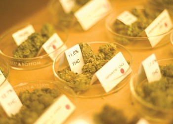 Where to Buy Legal Weed in the East Bay on Jan. 1