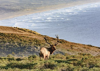 Point Reyes Ranchers Create Lobbying Group to Weaken Protections for Public Lands