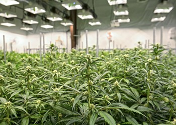 Warehouse Weed Farming in Richmond's Wild West