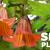 UC Botanical Garden Spring Plant Sale @ University of California Botanical Garden