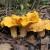 Winter Is Mushroom Season