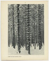 fe8889cd_event_five-tables_mountain-forest-in-winter_001.jpg