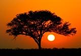 91257c50_african_twilight_shutterstock_no_giraffes.jpg