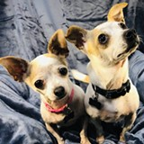 Opal and Jade one of the adorable and adoptable pair of Nobody's Perfekt Dogs - Uploaded by Cleophus Quealy