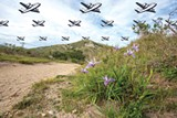 PHOTO BY BERT JOHNSON/ILLUSTRATION BY ROXANNE PASIBE - Point Reyes National Seashore.