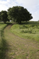 oak_grassland_in_knowlanddev_area_jh4_11_jpg-magnum.jpg