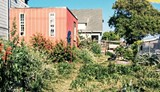 daaf5b87_wild_oakland_37th_and_west_microfarm_farm.jpg