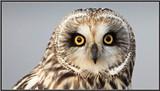 e57b36c7_owl.jpg