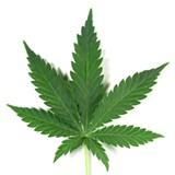 legalize-e311803c3683596f.jpg