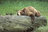 c7e85ebc_grizzly.jpg
