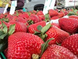 24b4bc75_strawberries_5-13-2012-medina_berry_farm.jpg