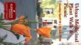 ALEMBIQUE APOTHECARY - Urban Medicinal Plant Walk in Berkeley