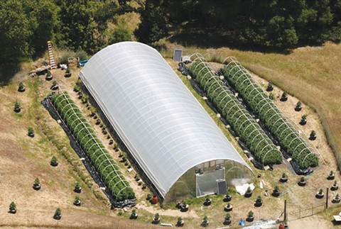"""A """"large"""" pot farm (above) is nothing compared to a """"small""""  corn or soybean farm."""