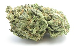 A flower bud of the strain Blueberry Headband -- a favorite in Washington. - DAVID DOWNS