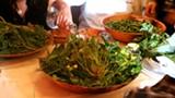 KRISTEN RASMUSSEN - Weed tasting at Chez Panisse.